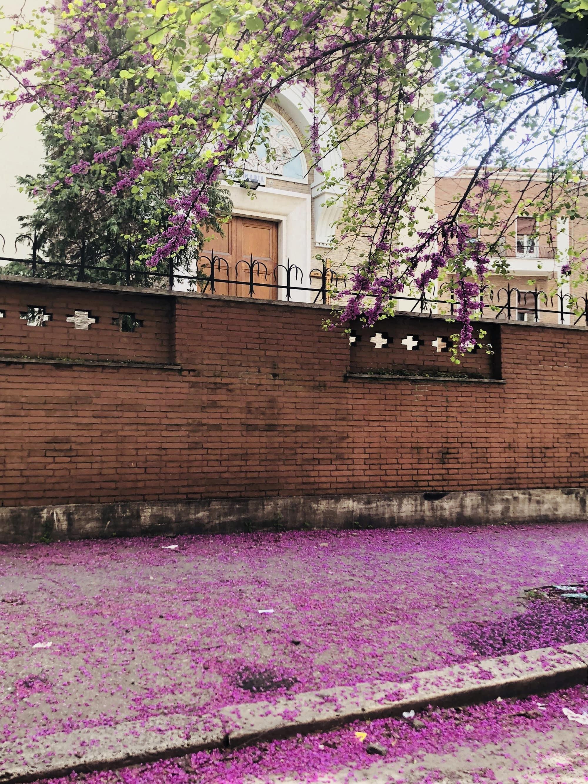 Roma fiorita